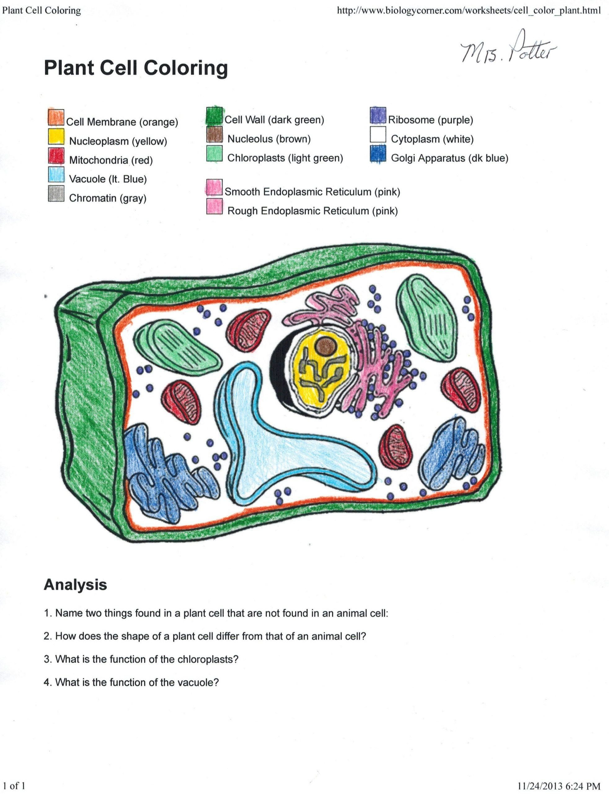 Animal Cells Coloring Worksheet Plant Cell Coloring Key 0