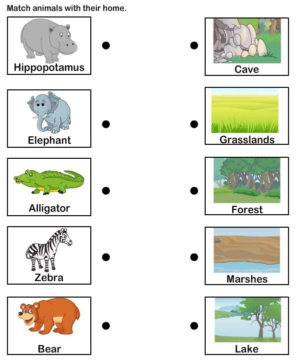 Students could match the animal to its habitat independently