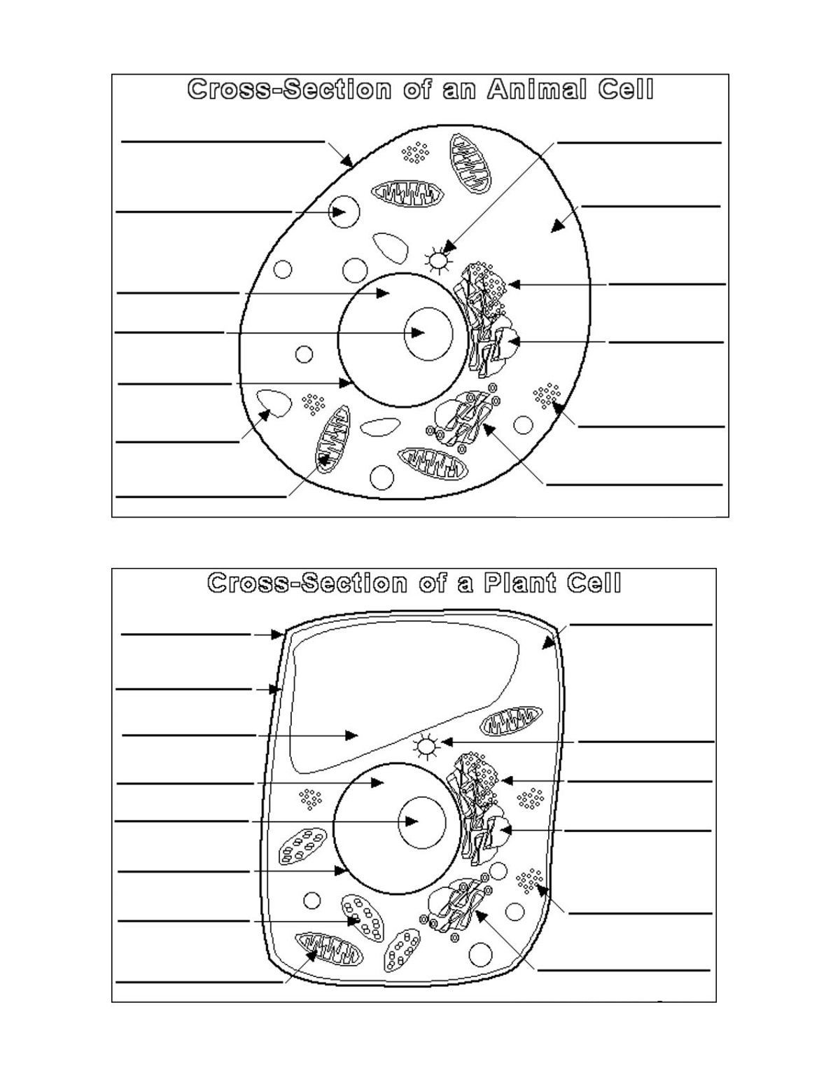 Plant and Animal Cell Diagram Blank