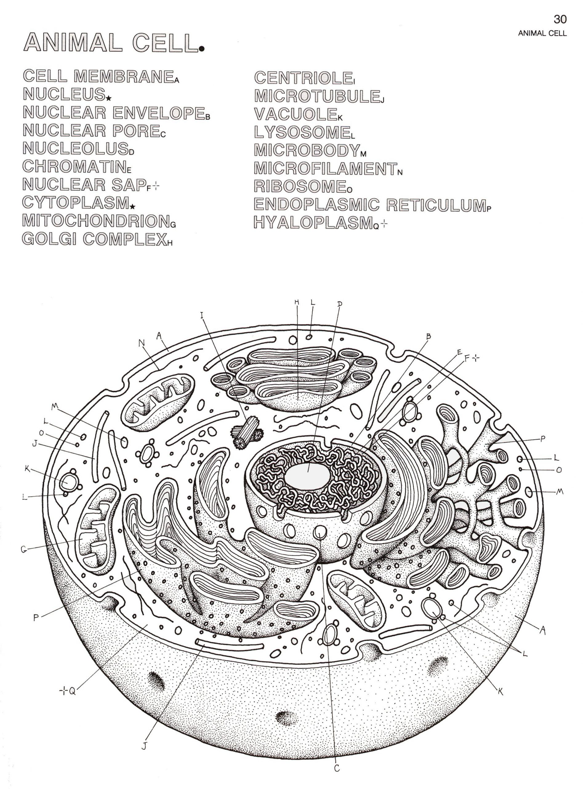 biology coloring pages biology coloring book 2280—3081
