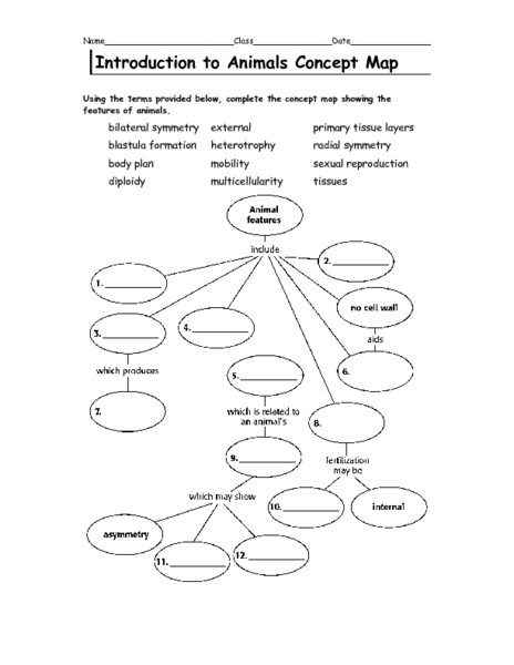Introduction to Animals Concept Map Graphic Organizer for