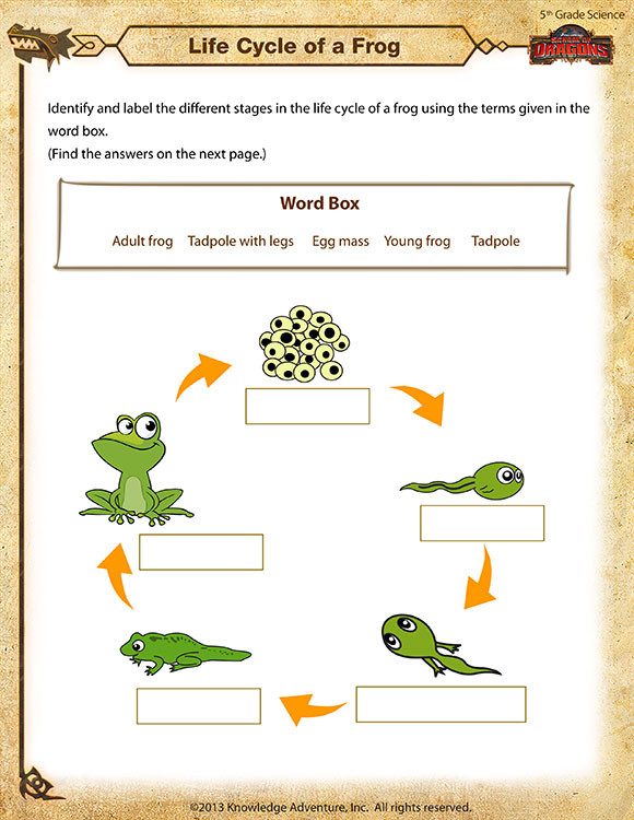 Life Cycle Of Animals Worksheet