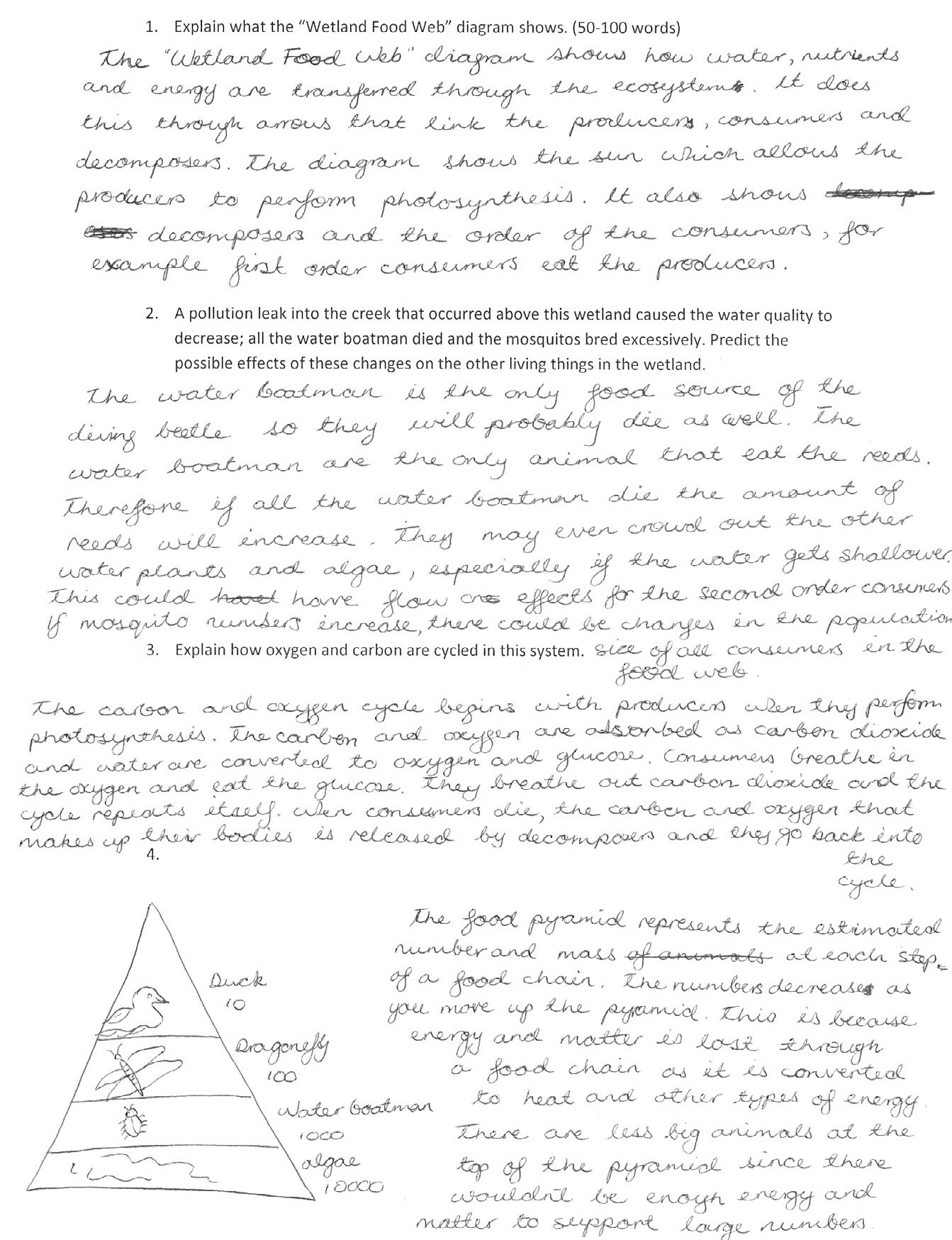What is An Ecosystem Worksheet